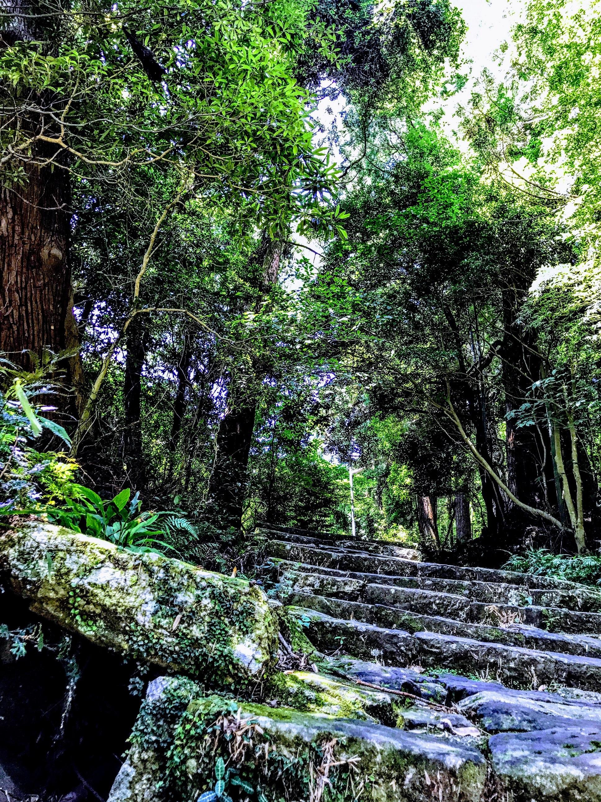 世界遺産「熊野古道」に行ってきました^^帰省や南紀白浜、伊勢志摩などトータル走行距離1500kmのドライブ旅行♪